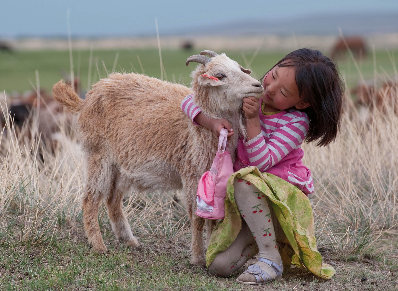 una bambina ed una capra da cashmere in  Mongolia